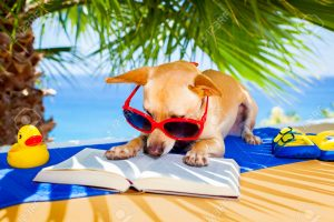 40575339-chihuahua-dog-reading-a-book-and-relaxing-under-the-palm-at-the-beach-enjoying-the-summer-vacation-h-Stock-Photo